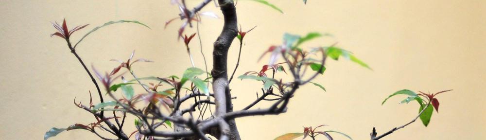 Papayouga